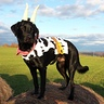 Photo #2 - Duke the Cow :)