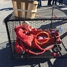Photo #5 - Crab in a Crab Pot