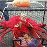 Photo #6 - Crab in a Crab Pot