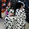 Photo #2 - Cruella and Dalmation Trick or Treat