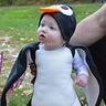 Photo #1 - Cute Penguin