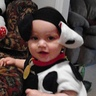 Photo #1 - Hunny the Dalmatian