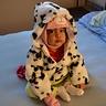 Photo #1 - Dalmatian puppy