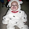 Photo #3 - Dalmatian Puppy