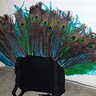 Photo #2 - Peacock backpack