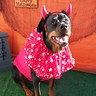 Photo #1 - Carla Devil Dog