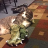 Photo #2 - Dinosaur Cat
