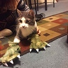 Photo #3 - Dinosaur Cat