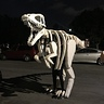 Photo #4 - Dinosaur Fossil