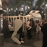 Photo #5 - Dinosaur Fossil