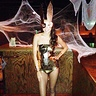 Photo #1 - Disco Bunny