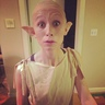 Photo #3 - Dobby