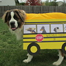 Photo #2 - AJ School Bus