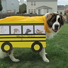Photo #1 - AJ School Bus