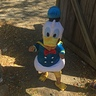 Photo #1 - Donald Duck
