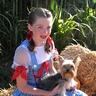 Photo #4 - Dorothy & Toto