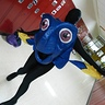 Photo #1 - Dory swimming through the hallway