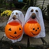 Photo #2 - Boo Dogs