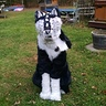 Photo #2 - Dragon Wolf sitting