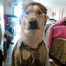 Photo #2 - Dwight Schrute Dog