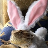 Photo #3 - Easter Bunny