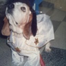 Photo #2 - This is Elvis dressed up as Elvis