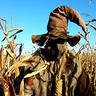 Photo #2 - Evil Scarecrow