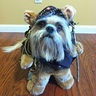 Photo #1 - Prince the Ewok