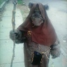 Photo #2 - Ewok on the street walking around