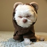 Photo #2 - Dia the angry Ewok
