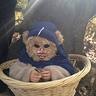 Photo #7 - Baby Ewok