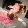Photo #2 - Maddie shows off her beautiful wings and skirt