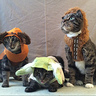 Photo #1 - Yo(u)-da Feline Force of the Galaxy