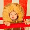 Photo #3 - Fierce Lion