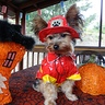 Photo #2 - Fireman Dog
