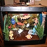 Photo #2 - Below is THE fish tank Body-LESS