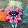 Photo #1 - adorable flower pup