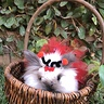 Photo #3 - Fluffy Ladybug
