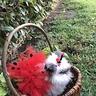 Photo #4 - Fluffy Ladybug