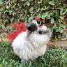 Photo #5 - Fluffy Ladybug