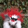 Photo #7 - Fluffy Ladybug