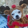Photo #2 - my  little Rudolph
