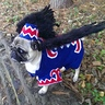 Photo #3 - Flying Monkey DIY costume for dogs
