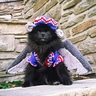 Photo #1 - Black Pom or Flying Monkey from Wizard of Oz?