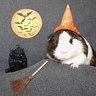 Photo #4 - Frankie the Pig-Witch