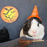 Photo #5 - Frankie the Pig-Witch