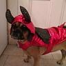 Photo #3 - Tillie in her devil suit.
