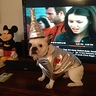 Photo #2 - Tin Man Frenchie 2