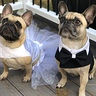 Photo #1 - Frenchie Bride and Groom