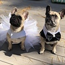 Photo #2 - Frenchie Bride and Groom